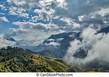 montagne, terrasse, riz