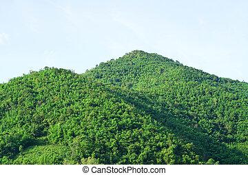 montagne, verde