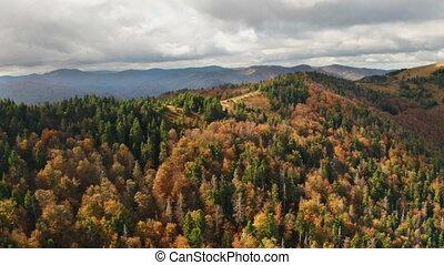 montagne, voler, autmn, sunset., beau, au-dessus, forêt, ...