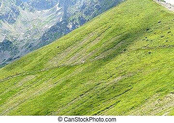 montagnes, alpe, tatra, vert, poland.