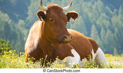 montagnes, animal, vache, nature, forêt, alpin