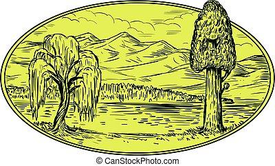 montagnes, arbre saule, lac, ovale, sequoia, dessin