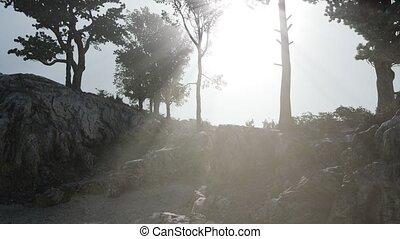 montagnes, arbres, rochers