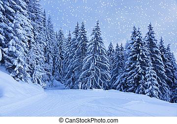 montagnes, autriche, station sports hiver, zell-am-see
