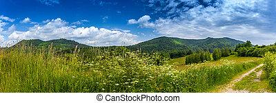 montagnes, bieszczady, paysage