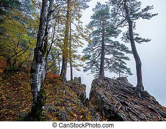 montagnes, brumeux, forêt, arbres, fantasme