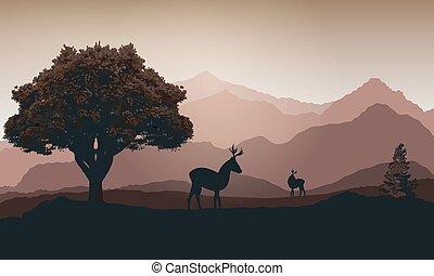 montagnes, cerf, coucher soleil, contre, fond