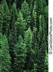 montagnes, désert, arbres pin, paysage, forêt