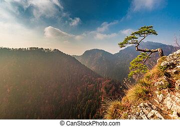 montagnes, ensoleillé, pieniny, automne, sokolica, pic, jour