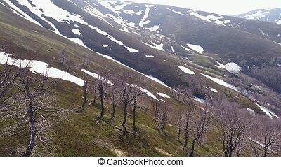 montagnes, envergure, areas., neigeux, sur, arbres, bas, pentes, sommet