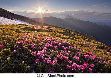 montagnes, fantastique, coucher soleil