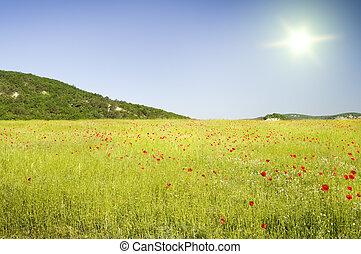 montagnes., fleur, pré vert
