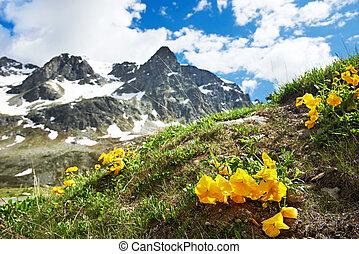 montagnes, fleurs, alpin