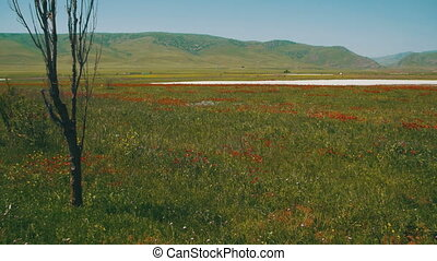 montagnes, fleurs, mouvementde va-et-vient, champ, arrière-plan rouge, coquelicots, vent