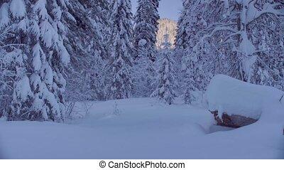 montagnes, forêt, sibérien, neigeux