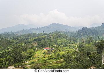 montagnes, forêt verte, paysage