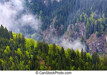 montagnes, forêts, pin