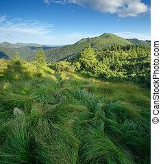 montagnes, herbe, luxuriant