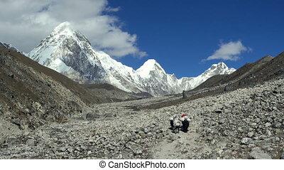 montagnes, népal, himalaya
