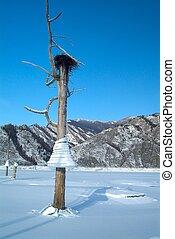 montagnes, nid oiseau, arbre, lac, fond, glaçons