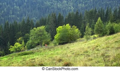 montagnes, rural, solitaire, carpathian, ukrainien, cheval, ...