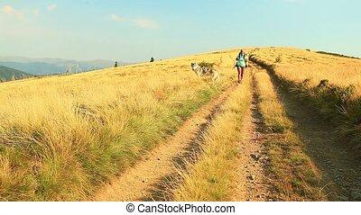 montagnes, sibérien, randonneur, femme, husky, chiens