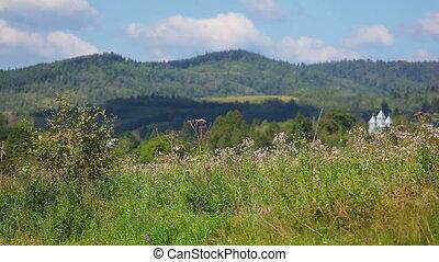 montagnes, spikelets, carpathian, s'agiter, herbe, vent, indigène