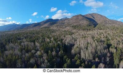 montagnes, sur, bourdon, forêt, vol