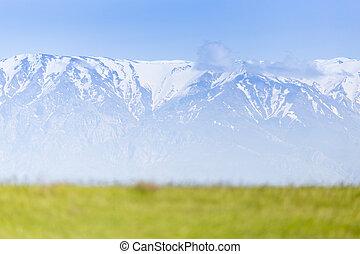 montagnes, vert, clairière, neigeux