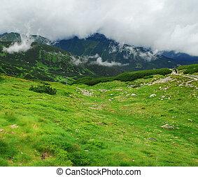 montagnes, vert