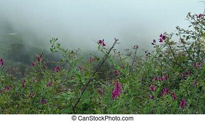 montagnes, wildflowers, croissant, niveau, lilas, nuage