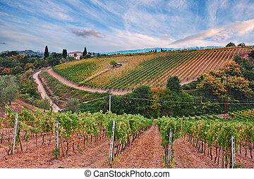 Montalcino, Siena, Tuscany, Italy: the hills with vineyard ...