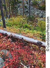 montana, bosque de otoño, paisaje