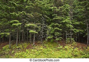 montana, bosque