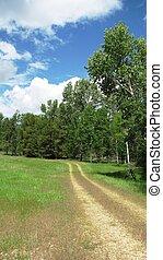 montana, camino de tierra, vertical
