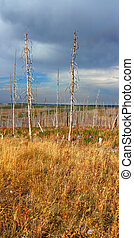 montana, campo, en, otoño