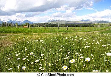 Montana Landscape - Scenic landscape near Glacier National...