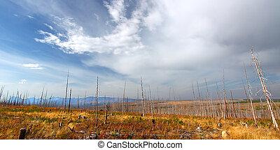 montana, otoño, paisaje