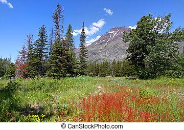montana, paisagem