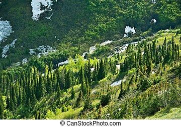 montana, paisaje de tierra virgen