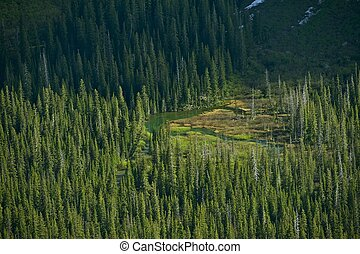 Montana Wilderness from Bird Eye. Forest Valley and Small Mountain Lake. Montana Photography Collection. Deep Forest of Glacier National Park.