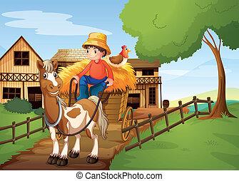 montando, carruagem, costas, galinha, agricultor