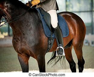 montando, cavalo