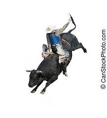 montando, touro