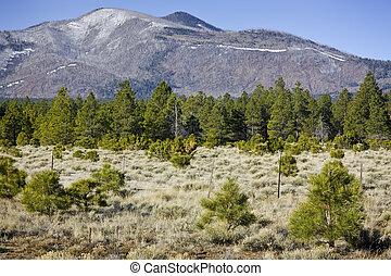 montanha, árvores pinho