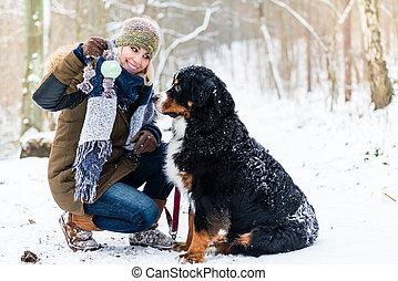 montanha, andar, mulher, inverno, cão, bernese, dia
