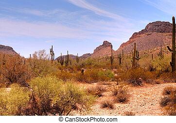 montanha, arizona, deserto