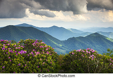 montanha azul, rhododendron, cume, picos, primavera,...