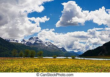 montanha, flor, campo, paisagem