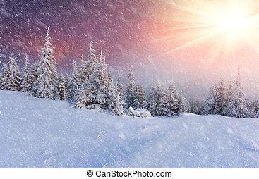 montanha, floresta, snowstorm